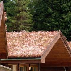 sedum-chalet-roofs