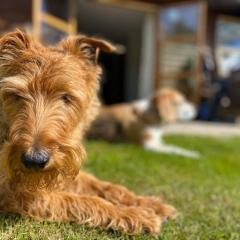Dog-Friendly-Holidays-6