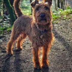 A dog at Loch Lomond Waterfront