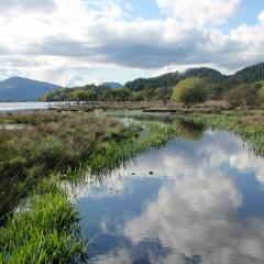 Marshland at Loch Lomond Waterfront