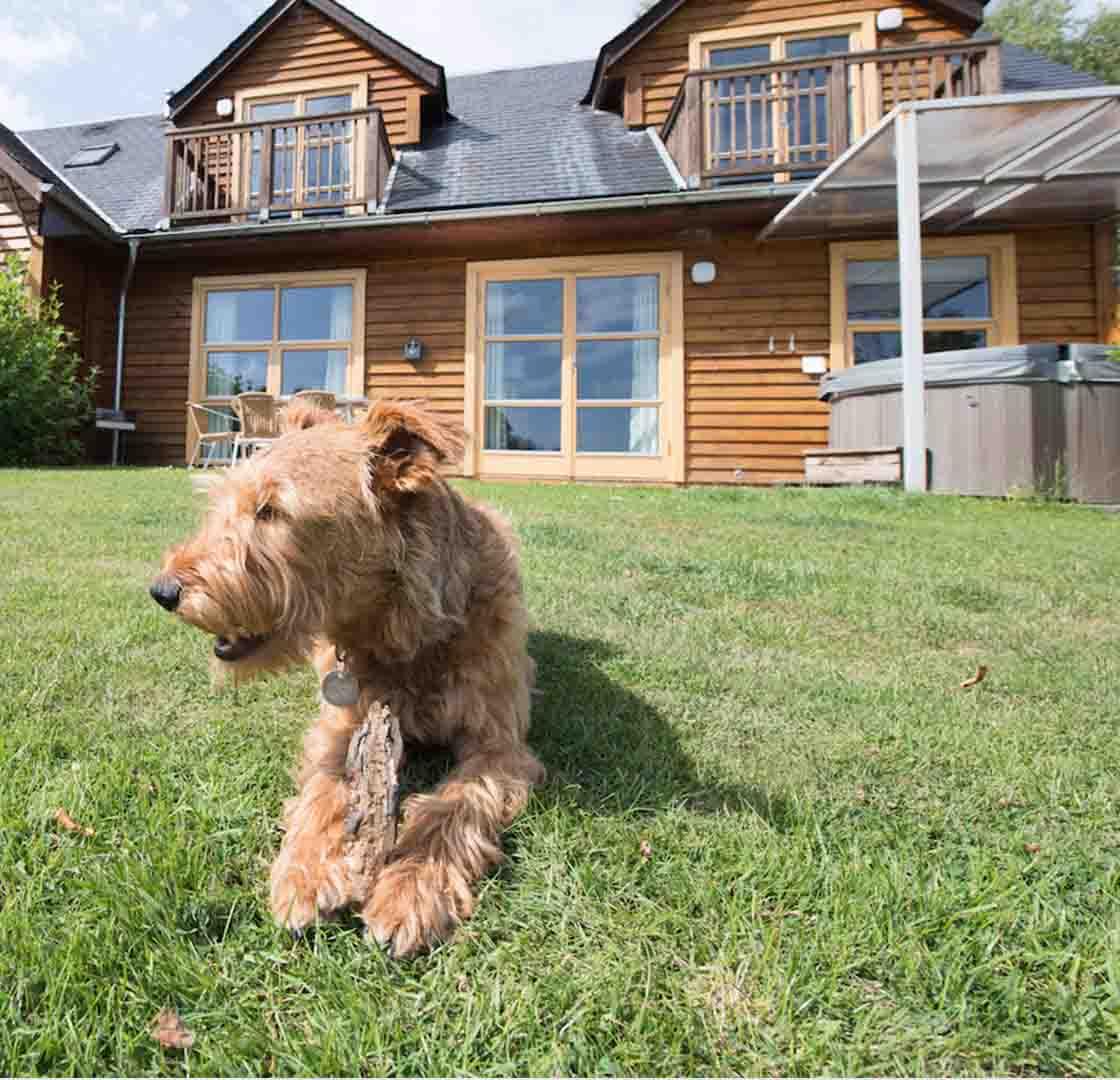 Pet-Friendly Lodges in Scotland | Loch Lomond Waterfront